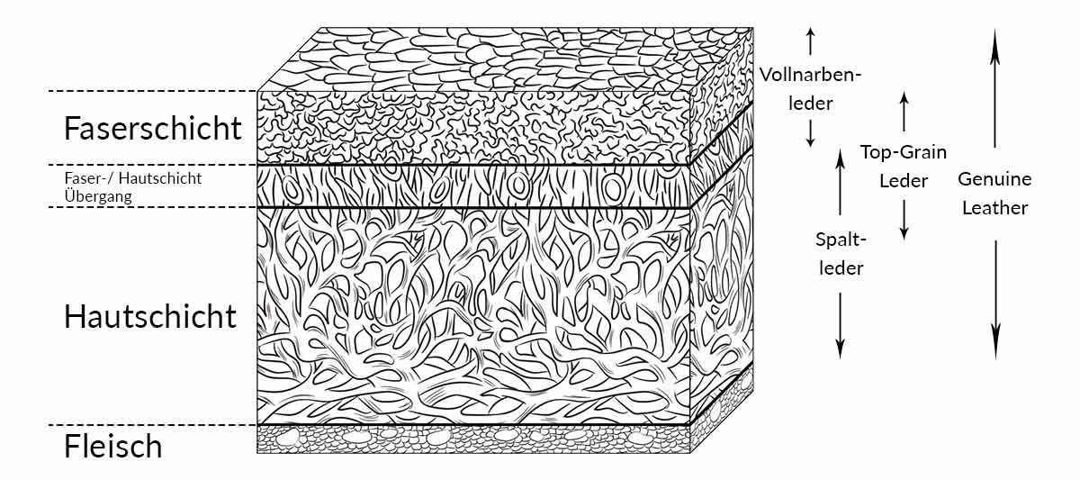 Querschnitt-Illustration einer Kuhhaut mit den verschiedenen Lederstufen.