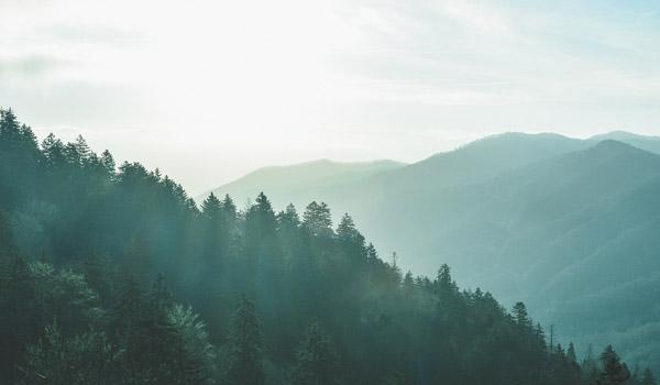 Bewaldete Gebirgszüge
