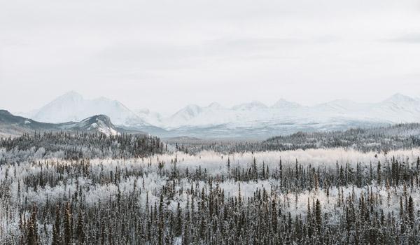 Schneebedeckter Wald mit Bergen im Hintergrund.