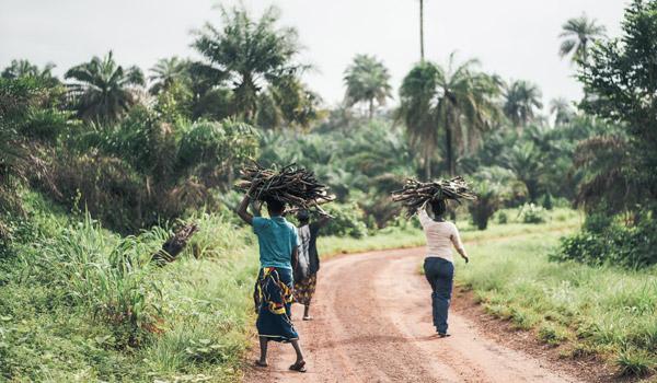 Afrikanische Frauen, die Holz auf ihrem Kopf tragen.