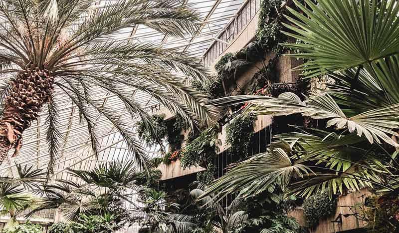 Tropische Pflanzen im Inneren des berühmten Barbican Room Gewächshauses.